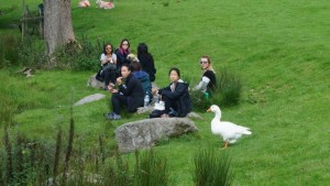 Loughrigg Tarn Geese